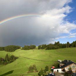 Regenbogen über Wildewiese 🌿🌈