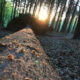 AbendRunde im Wald