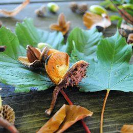 Wildewiese Herbst