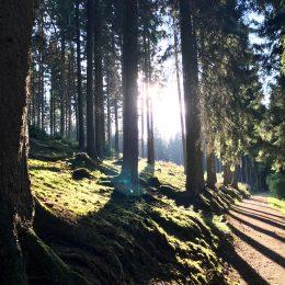 fantastisches Licht – genieß die Natur