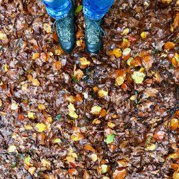 Herbst Momente?