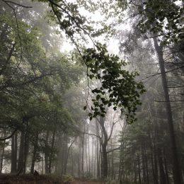 Wildewiese im Nebel 🌫🌫