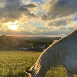 Das Glück der Erde liegt auf dem Rücken der Pferde 🐎