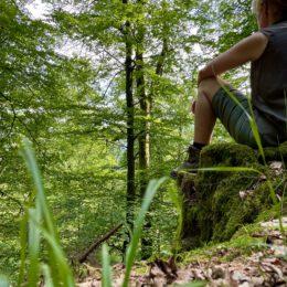 Wald Auszeit